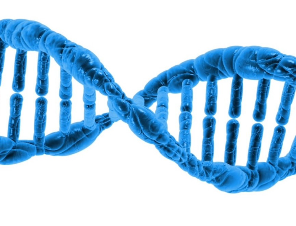 The deeper Meaning of DNA